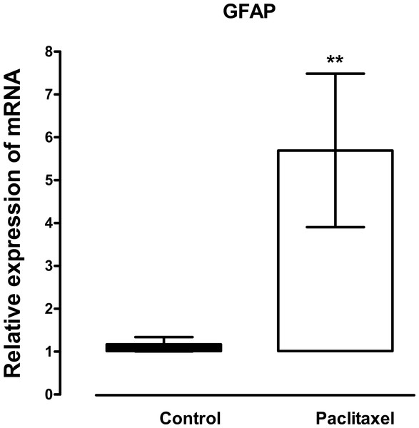 Effects of paclitaxel on glial fibrillary acidic protein (GFAP) transcript levels in the anterior cingulate cortex (ACC).