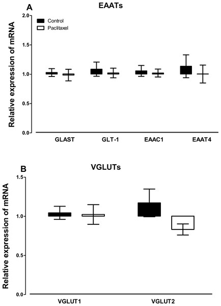 Effects of paclitaxel on glutamate transporters transcript levels in the anterior cingulate cortex (ACC).