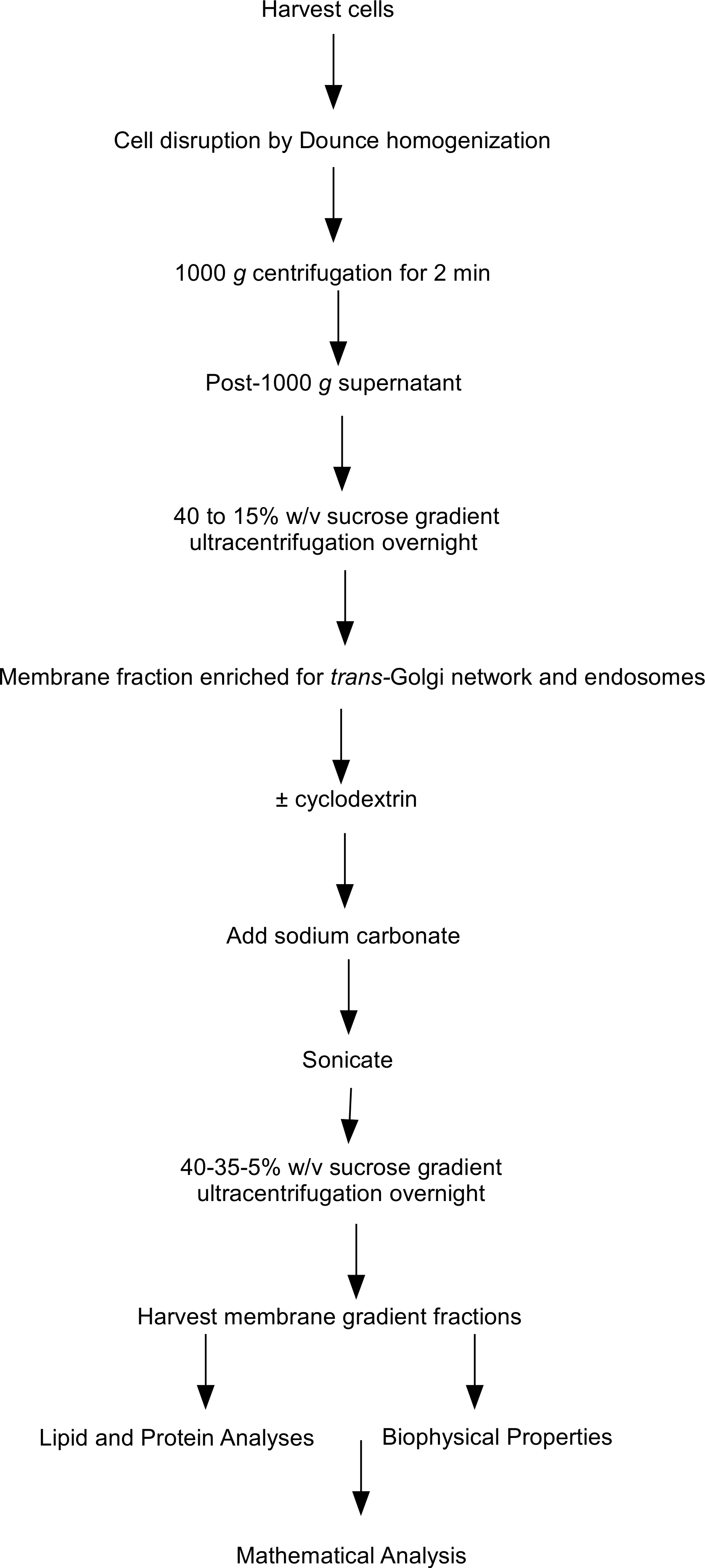 Modeling the effects of cyclodextrin on intracellular membrane download full size image geenschuldenfo Image collections