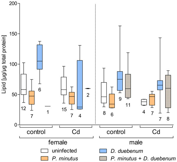 Lipid content in infected and uninfected G. fossarum females and males after cadmium exposure.