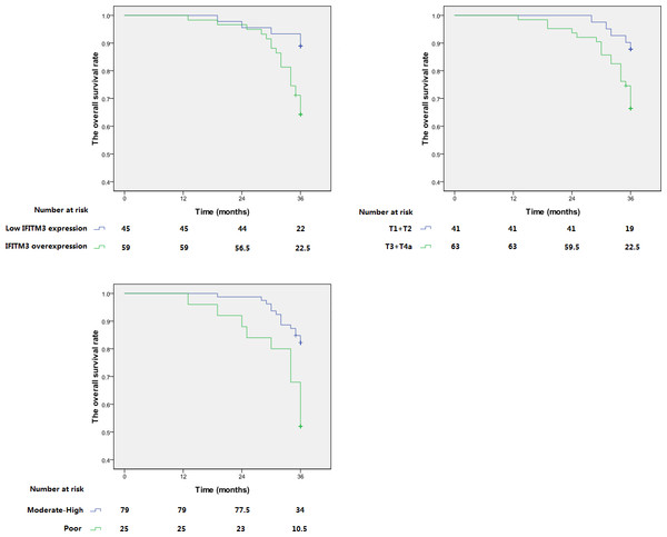 Kaplan–Meier analysis of overall survival of ESCC patients.