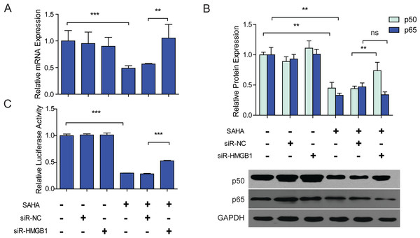 SAHA induced down-regulation of NF-κB1 was HMGB1 dependent.