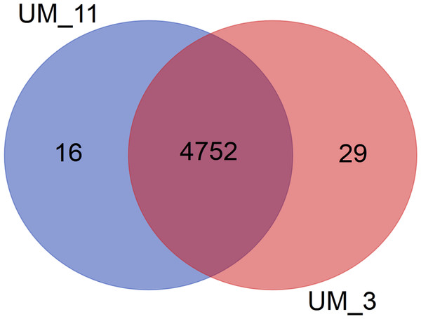 Venn diagram showing sharing of gene families between UM_3 and UM_11.