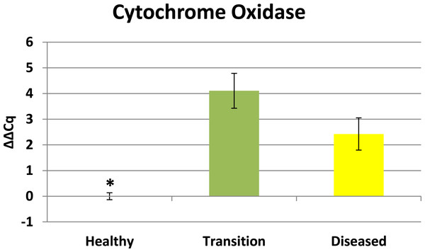 Expression of zooxanthellae Cytochrome Oxidase.