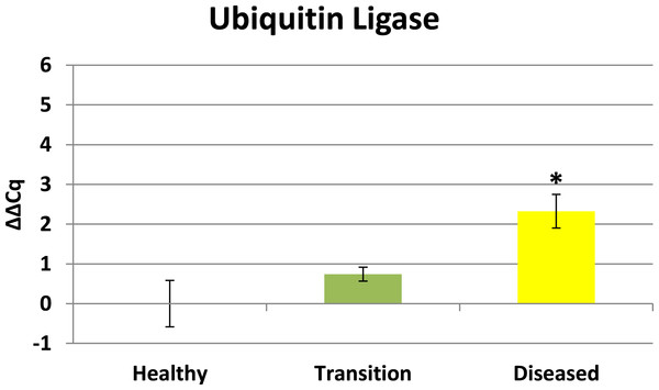 Ubiquitin Ligase expression.
