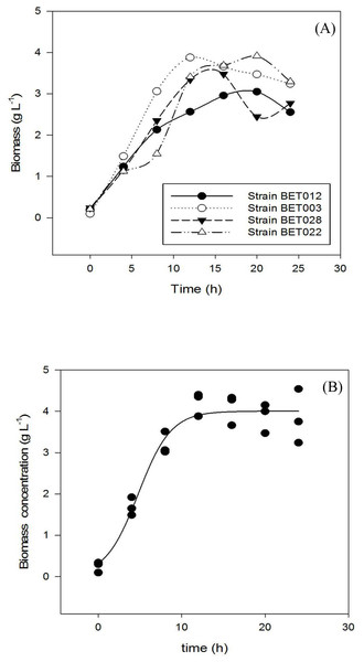 Growth profiles during 24 h fermentation of MRS medium at 30 °C: (A) LAB strains BET012, BET003, BET028, BET022; (B) BET003 in triplicate.