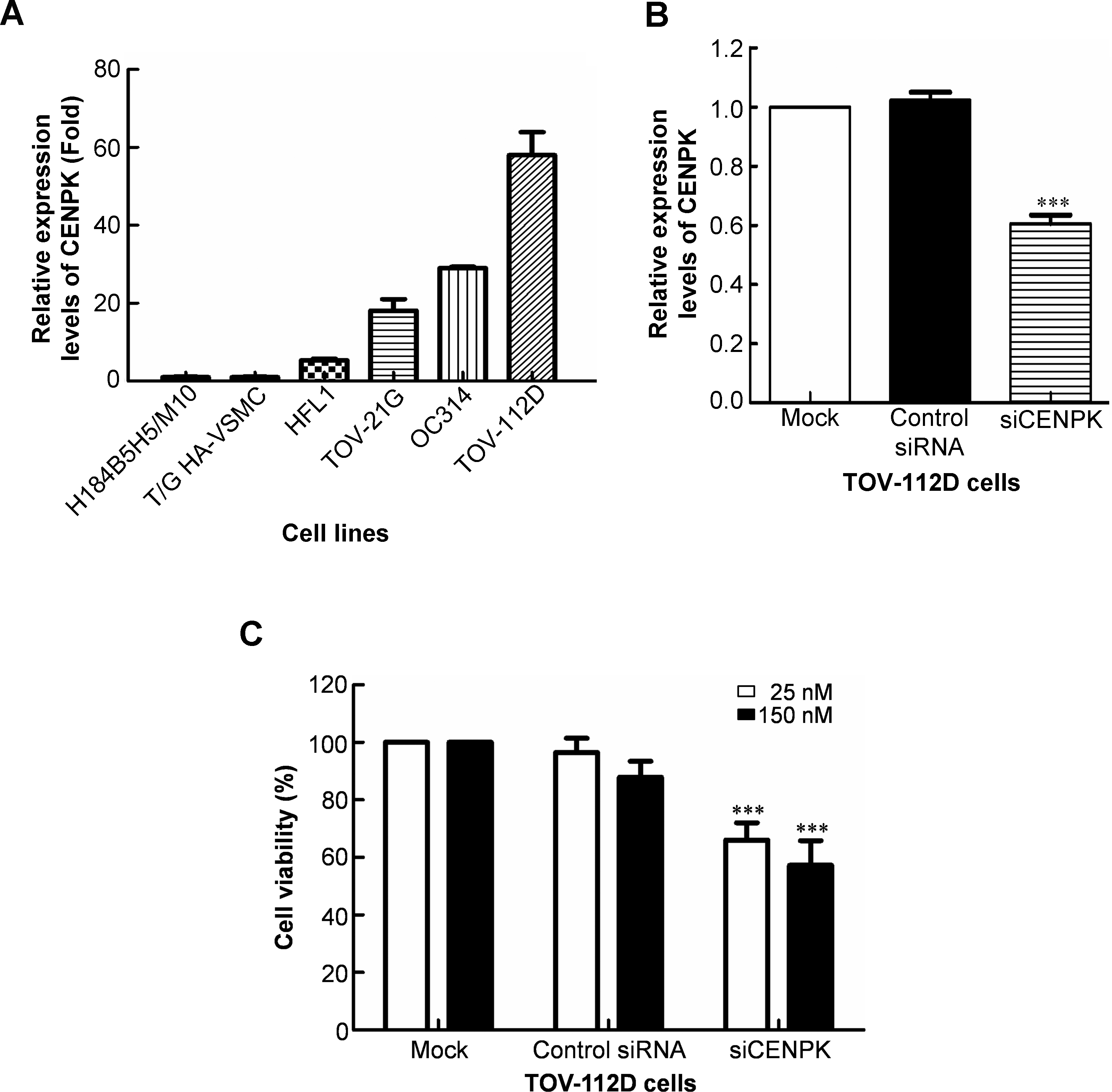 Overexpression of centromere protein K (CENPK) in ovarian cancer is ...