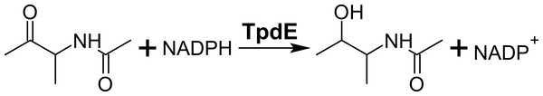 Reduction of N-(butan-3-one-2-yl)acetamide into N-(3-hydroxybutan-2-yl)acetamide by TpdE.