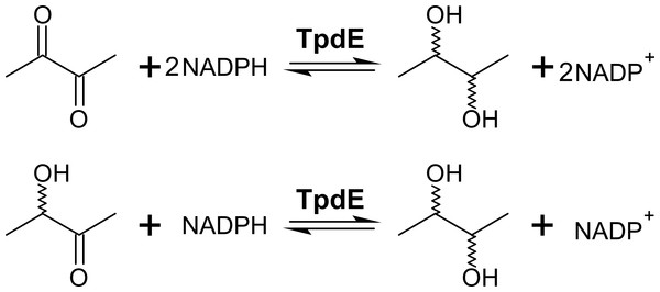 Diacetyl conversion to 2,3-butanediol catalyzed by TpdE.
