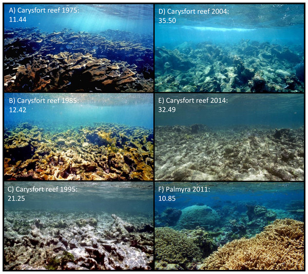 Aesthetic values of Carysfort reef.