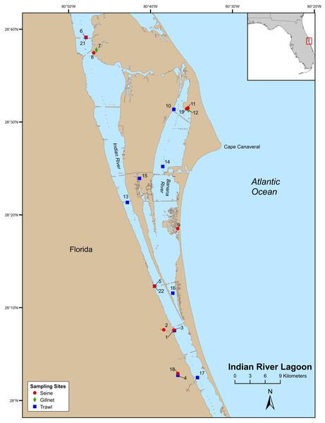 Map of Indian River Lagoon sampling stations.