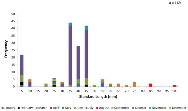 Number of ladyfish collected by standard length (mm) in Volusia County, Florida during 1993 through 1995.
