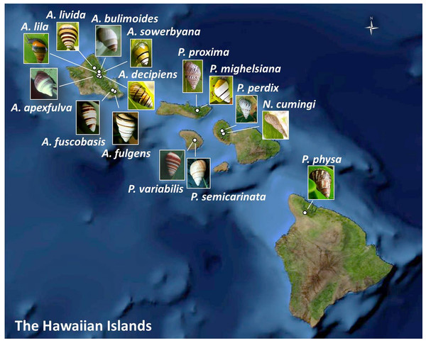 Collection sites for fifteen species of Hawaiian tree snails with populations in the captive-rearing facility at the University of Hawaiʻi at Mānoa.