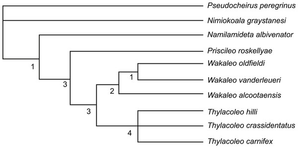 Strict consensus tree of two most-parsimonious-trees obtained from cladistic analysis of thylacoleonid interrelationships.
