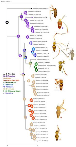 Biogeographical analysis.