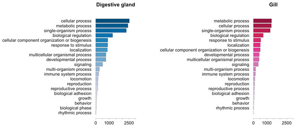 Graphical representation of the GO terms (general sub-categories in Biological Process ontology) most represented in transcripts differentially expressed for each mussel tissue according to the microarray analysis.