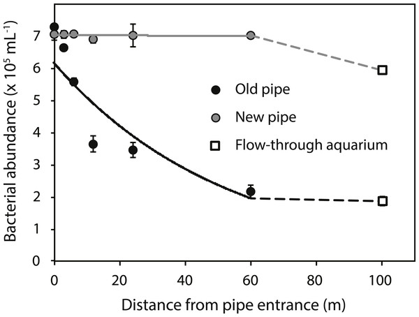 Bacterial abundance along the old (black circles) and new (grey circles) inlet pipes leading to the flow-through aquarium (open squares).