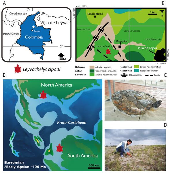 Leyvachelys cipadi FCG-CBP-71 location, geological and paleogeographical context.