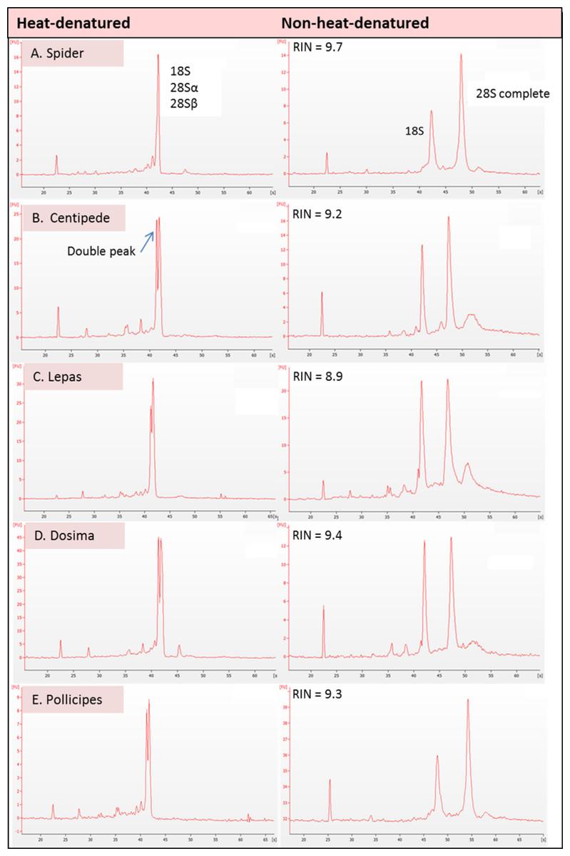 Degraded Rna Profiles In Arthropoda And Beyond Peerj