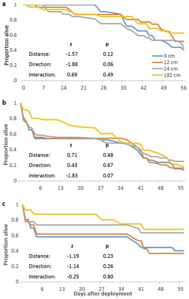 Pocillopora damicornis mortality relating to localized predation episodes.