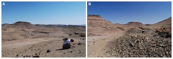 Field photographs showing the Taddrist Formation and the levels yielding fossiliferous concretions.