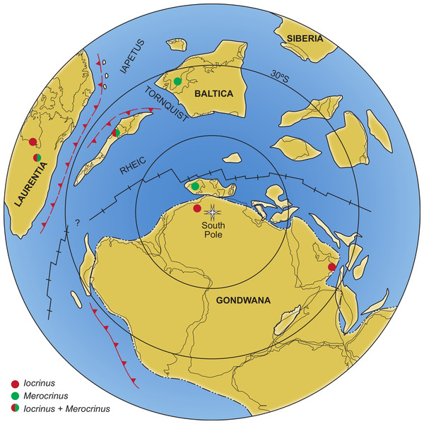 Distribution of the major paleocontinents during the Middle Ordovician, showing the known geographical distribution of Iocrinus and Merocrinus.