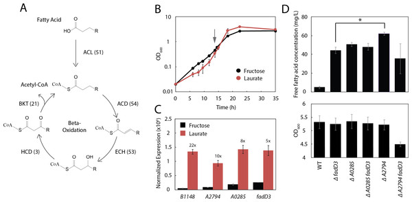 Three additional acyl-CoA ligases limit FFA yield.