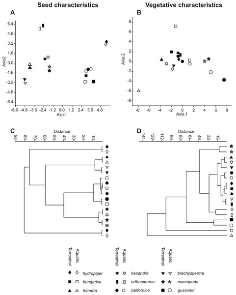 Morphological relationships among the surveyed Elatine species as displayed by MDA scatterplots (A, B) and UPGMA cluster diagrams (C, D).