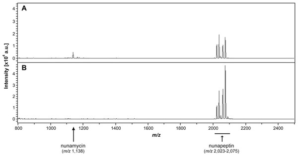 Identification of nonribosomal peptides in Pseudomonas crude extracts by MALDI-TOF MS.