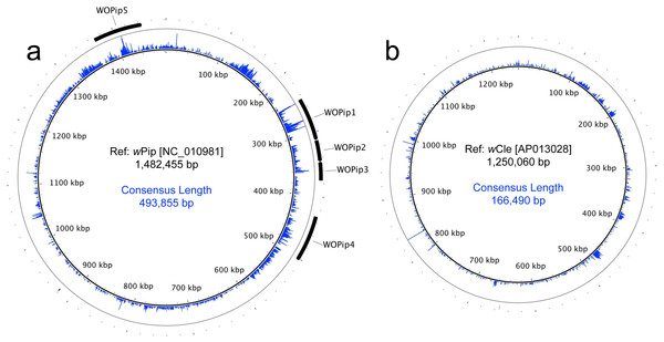 Circular maps of sequencing coverage across the reference genomes of (A) wPip and (B) wCle.