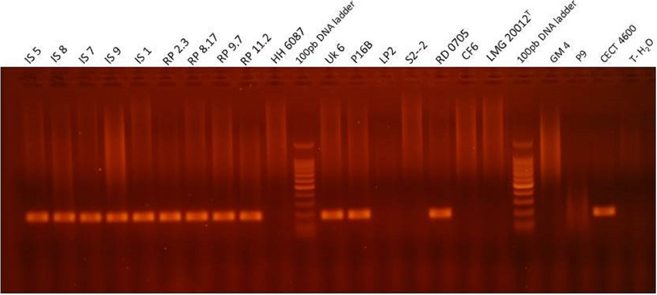 Development of a Taqman real time PCR assay for rapid detection and