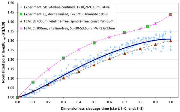 Comparison of our cumulative measurements of polar elongation of Sk (400 μm) embryonic cells vs. Cj (100 μm) data (Hiramoto, 1958) vs. FE simulations of spindle-free (i.e., Sk) and spindle-extended (i.e., Cj) contractile ring models.