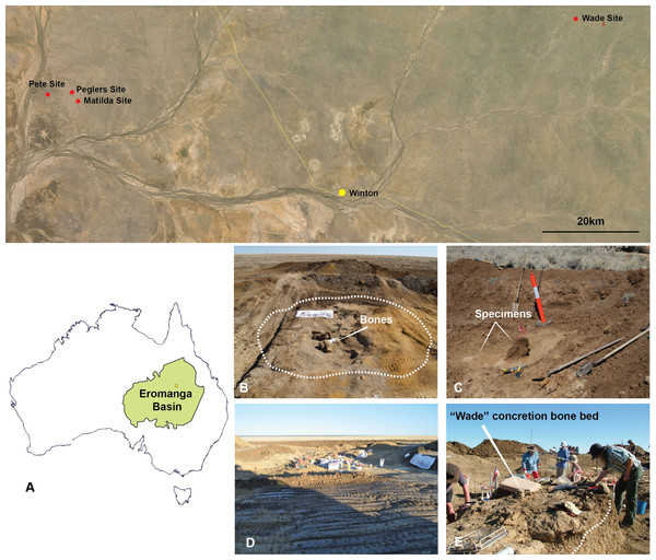 Australian Age of Dinosaur Localities of Australovenator holotype and isolated theropod teeth.