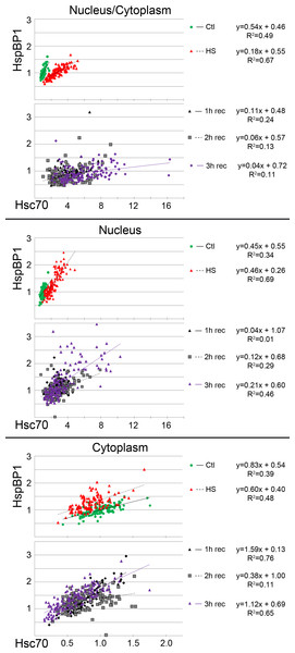 Regression analysis examines the interplay between hsc70 and HspBP1 at the single cell level.