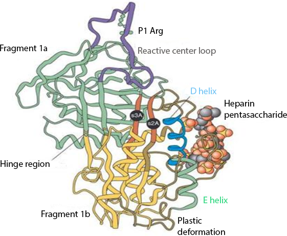 The Physiologic And Therapeutic Role Of Heparin In Implantation And