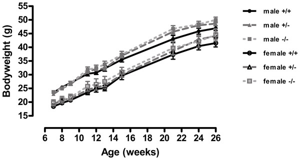 Body weight of wild-type, CMKLR1 knockout and CMKLR1 heterozygote mice fed on a high fat diet.