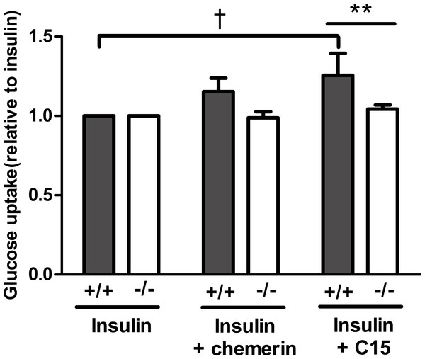 Glucose uptake in the presence of insulin (0.3 nM) in response to murine chemerin (40 pM) or its C15-terminal peptide (40 pM) in epididymal adipocytes from wild type and CMKLR1 knockout mice.