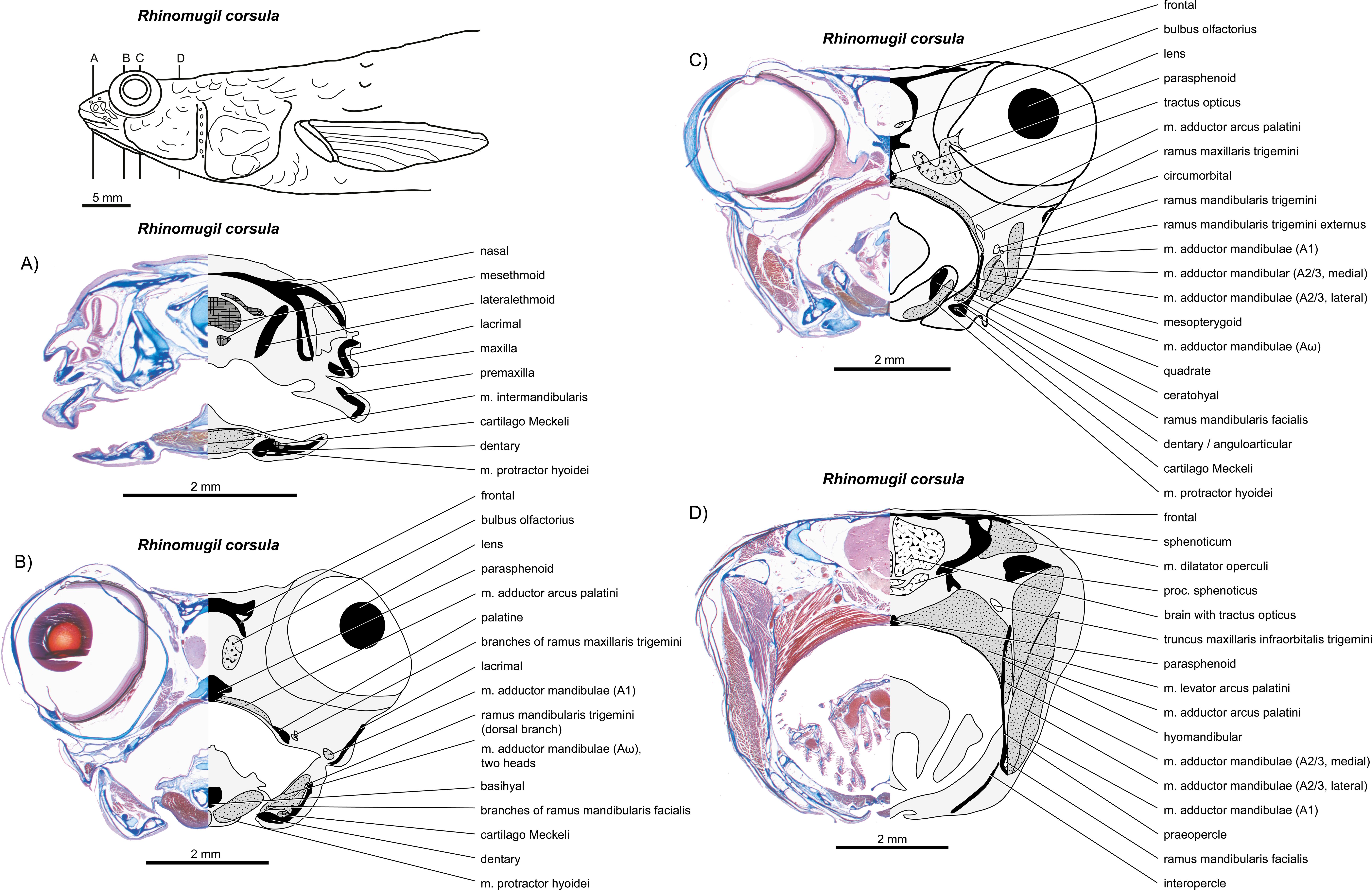 Groß Zuckersegelflugzeug Anatomie Bilder - Anatomie Ideen - finotti.info