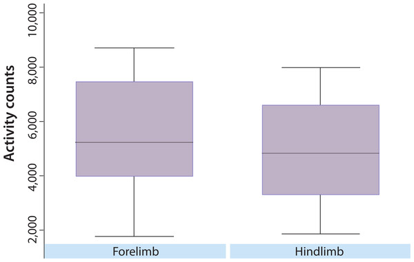 Overall distribution of nighttime activity in dogs with predominately fore or hind limbs affected.