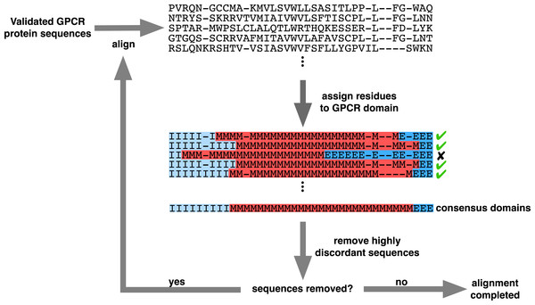 Iterative alignment strategy used to generate the structurally-informed vertebrate biogenic amine receptor MSA.