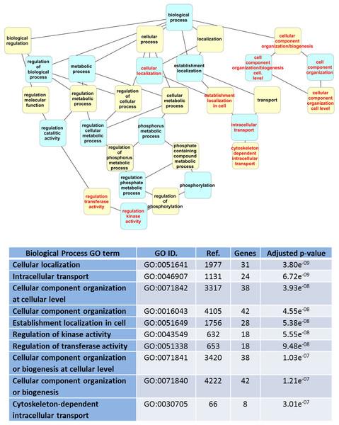 """Dendrogram of """"GO biological process"""" terms enriched for LRRK2 interactors in WebGestalt."""