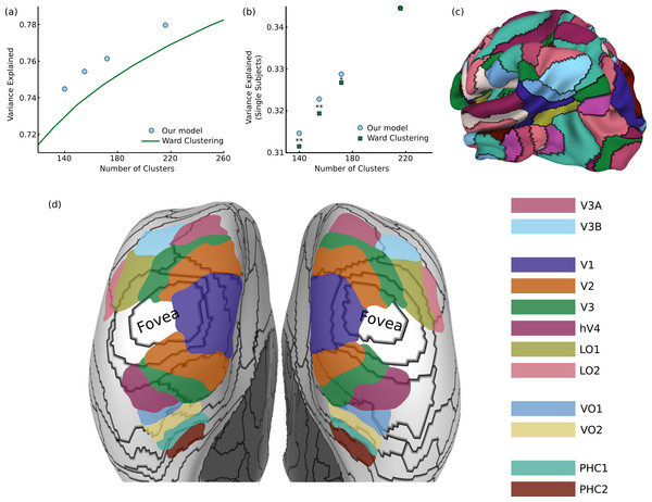 Results on functional brain connectivity