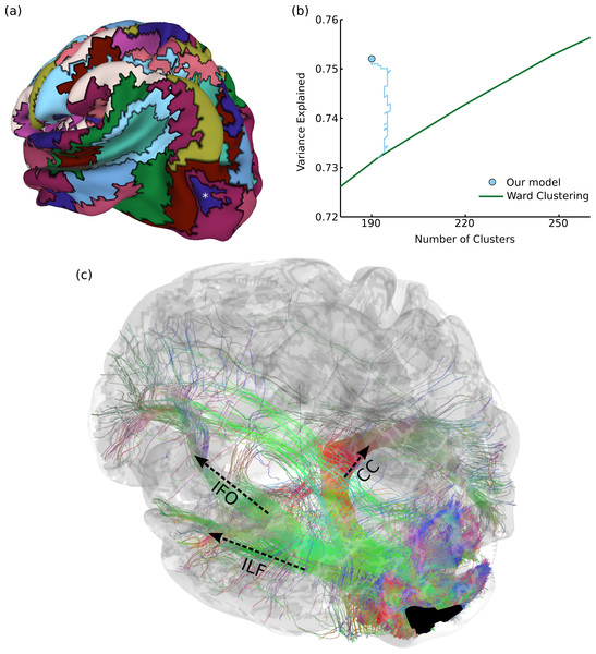 Results on structural brain connectivity.