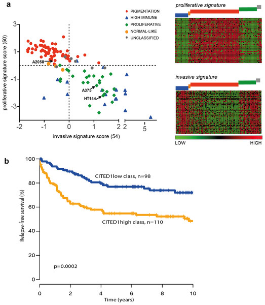 The CITED1-silenced gene signature predicts patient outcome.