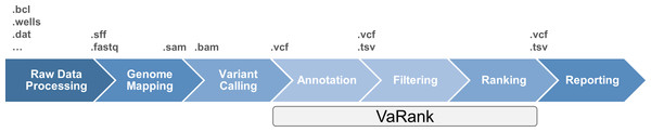 High throughput sequencing data analysis workflow and VaRank positioning.