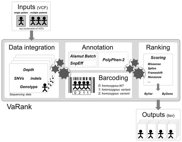 VaRank's workflow.