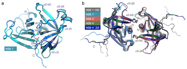 Structure and conserved packing interfaces of C-terminally extended NS6 proteases.