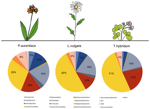 Comparison of the average bacterial community composition and relative abundances, at the phylum level (Proteobacteria divided into class) in root samples from three different plant species.