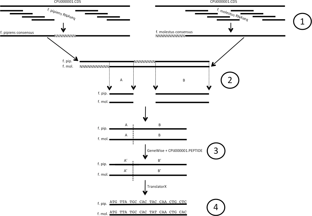Genetic divergence between populations of feral and domestic