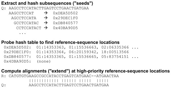 Seed-and-extend strategy for identifying potential alignments.